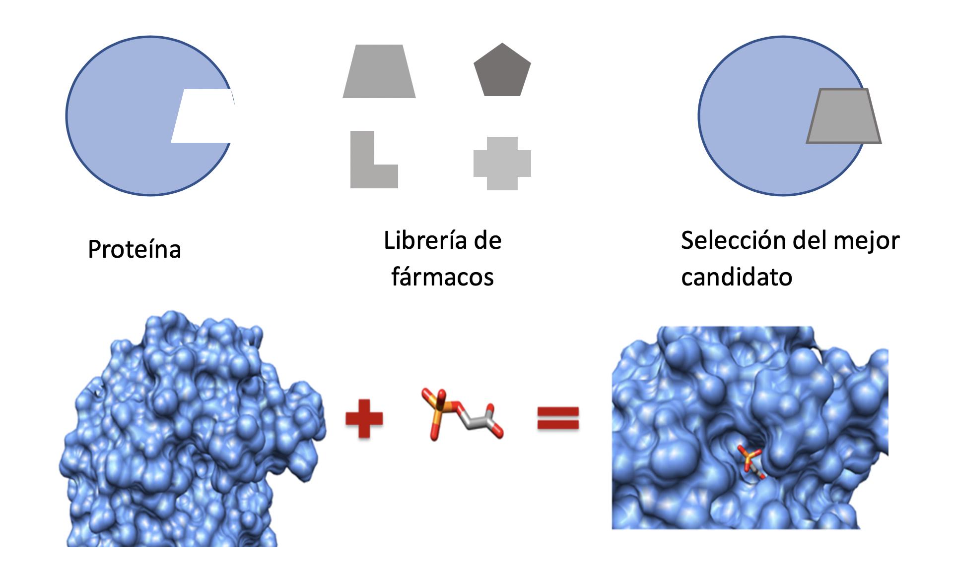 Docking molecular
